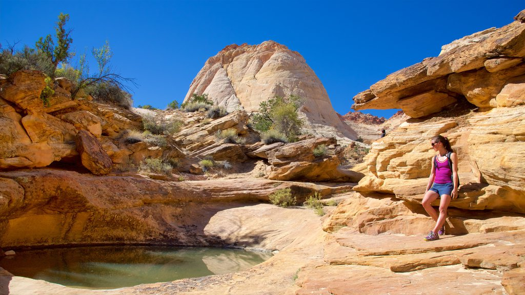 Capitol Reef National Park featuring desert views, tranquil scenes and a gorge or canyon