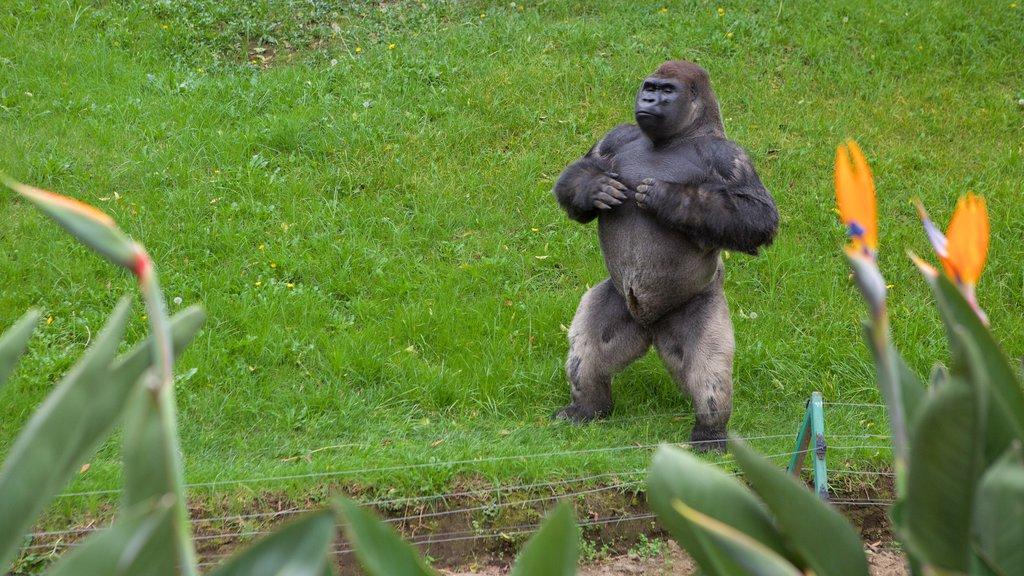 Parque Zoologico de Chapultepec featuring zoo animals and land animals
