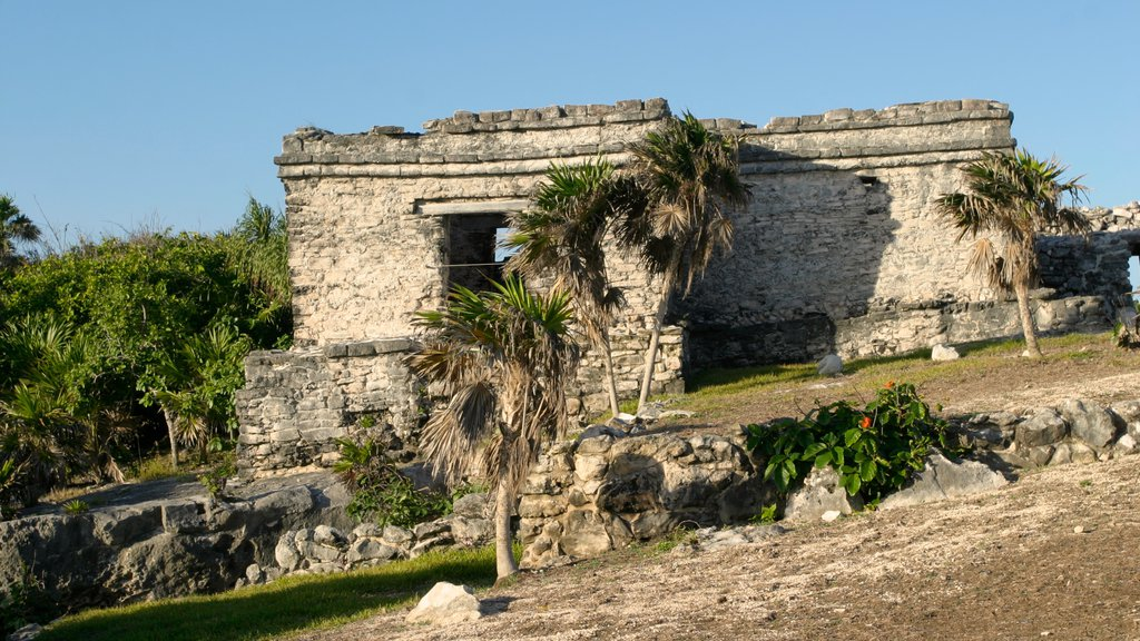 Tulum featuring tropical scenes and heritage elements