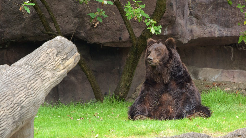 Parque Zoologico de Chapultepec showing zoo animals and dangerous animals