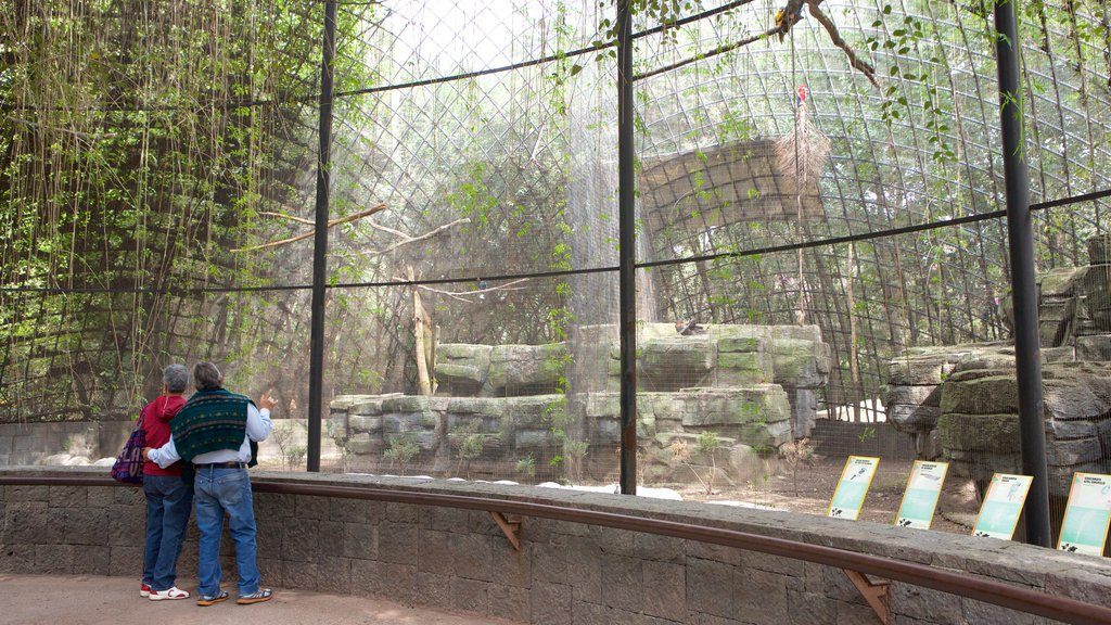 Parque Zoologico de Chapultepec which includes zoo animals as well as a couple
