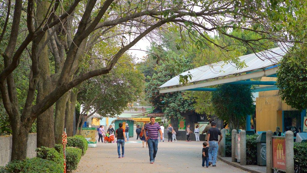 Parque Zoologico de Chapultepec showing zoo animals and street scenes