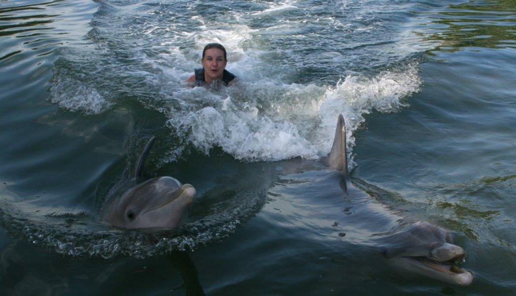 Zwemmen met dolfijnen in Florida