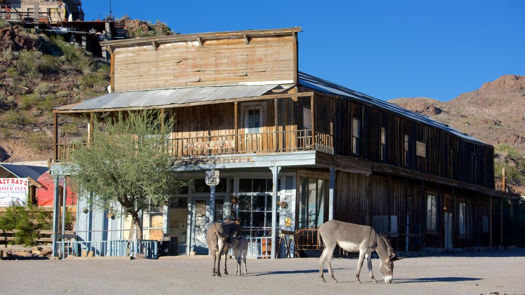 Oatman showing street scenes and land animals