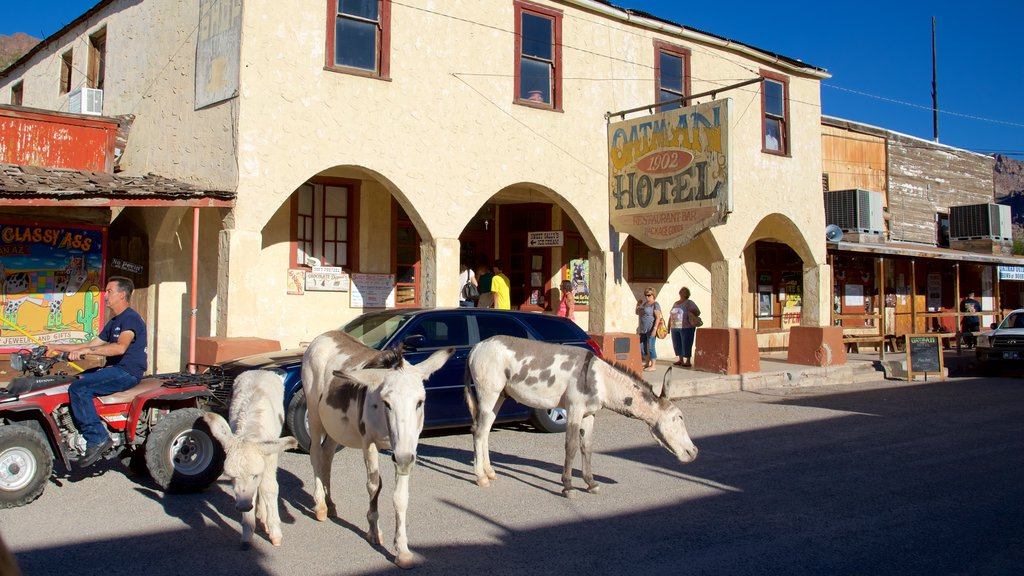 Oatman showing land animals and street scenes