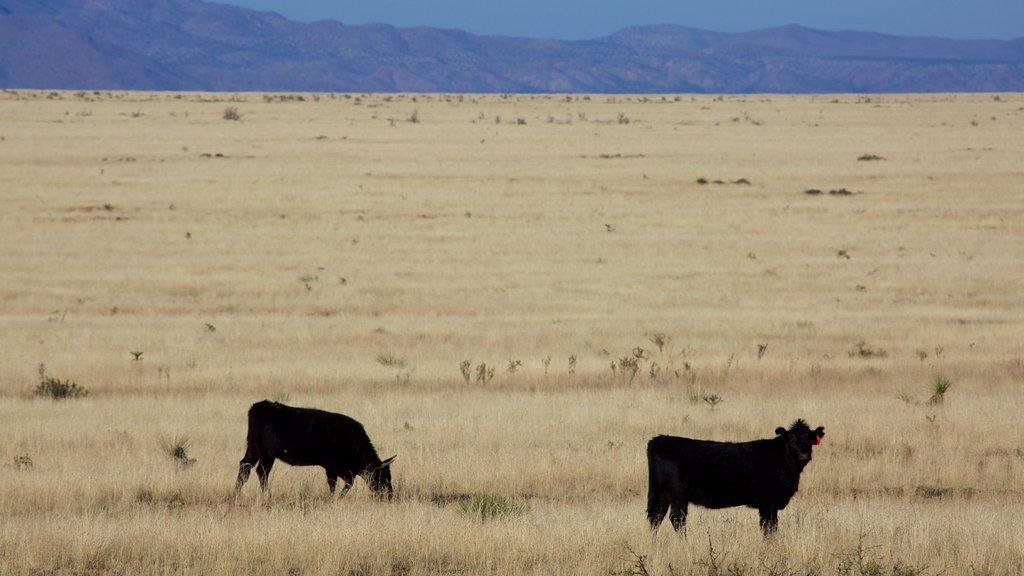 Socorro which includes farmland and land animals