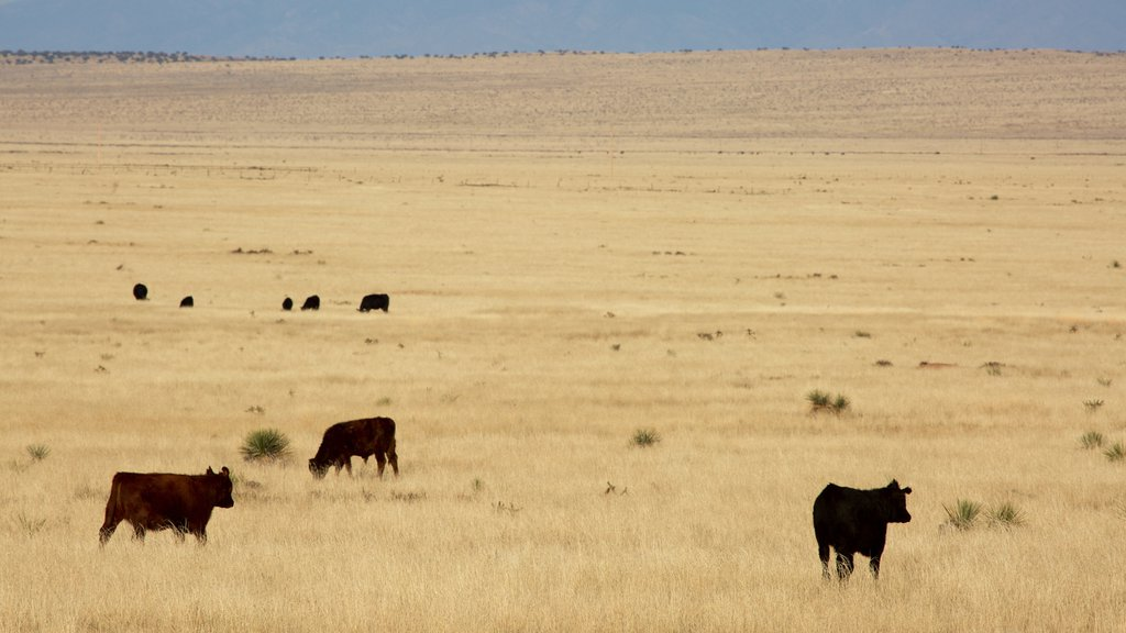 Socorro which includes land animals and farmland