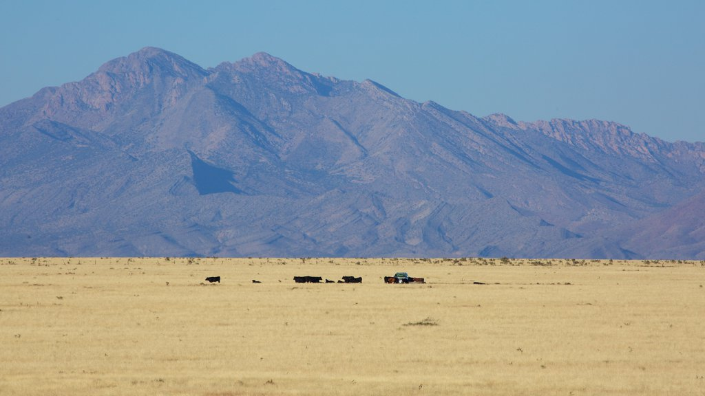 Socorro featuring mountains and farmland