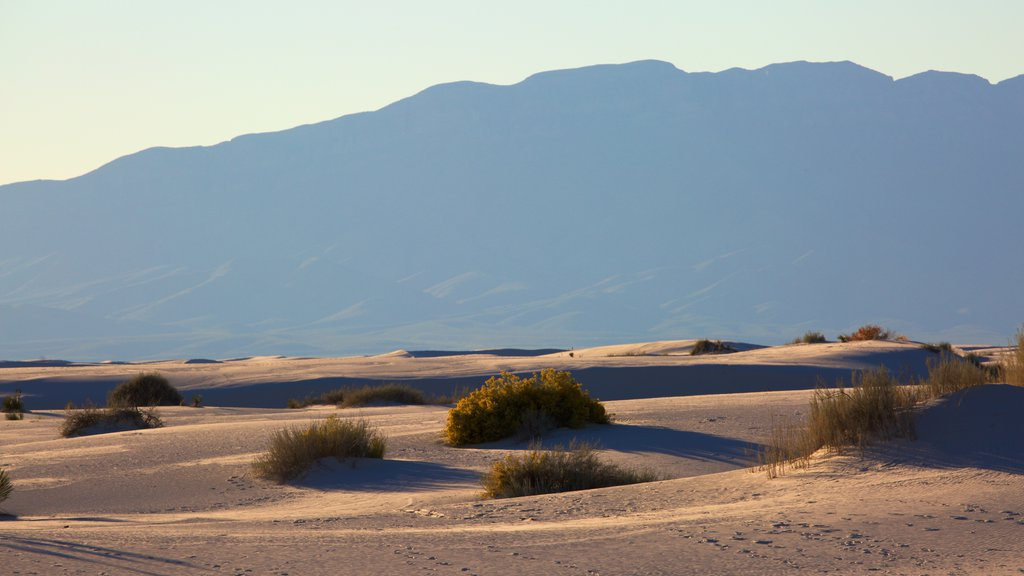 White Sands National Monument showing a sandy beach