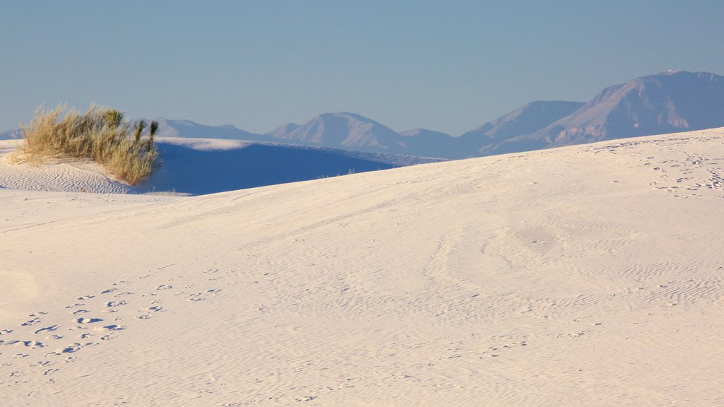 White Sands National Monument featuring a beach