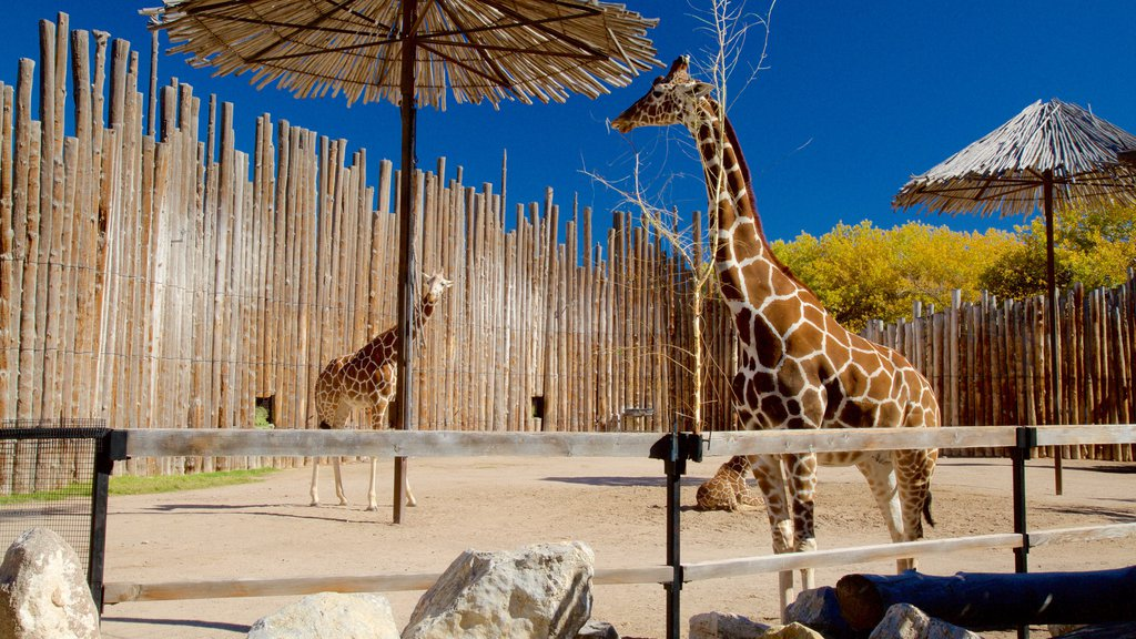 ABQ BioPark Zoo showing zoo animals and land animals
