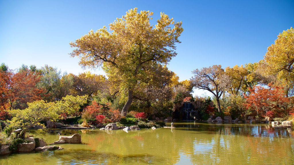 ABQ BioPark Botanic Garden showing a park, a pond and autumn leaves