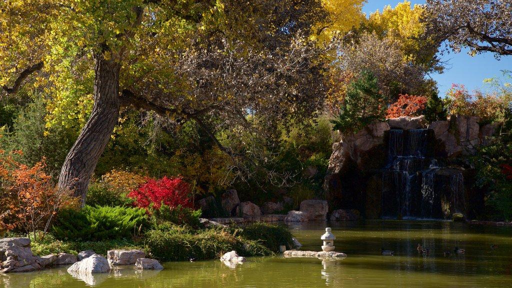 ABQ BioPark Botanic Garden which includes a pond and a garden