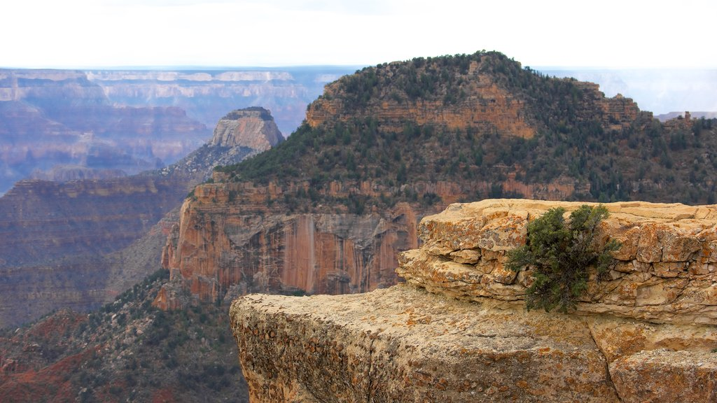 Bright Angel Trailhead which includes a gorge or canyon and tranquil scenes