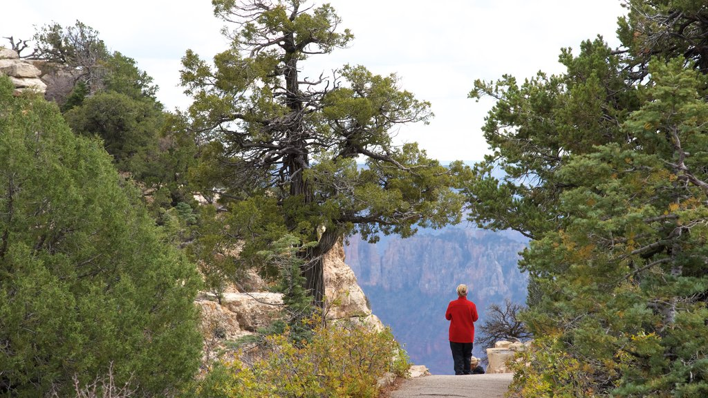 Bright Angel Trailhead which includes tranquil scenes and hiking or walking