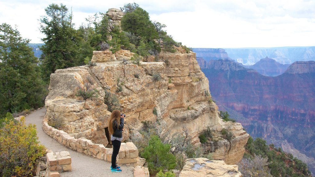 Bright Angel Trailhead featuring a gorge or canyon, hiking or walking and tranquil scenes