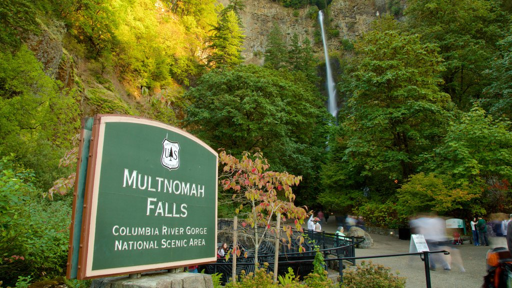 Multnomah Falls which includes signage