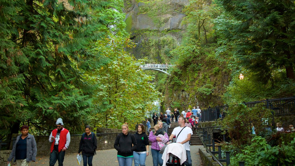 Multnomah Falls which includes rainforest as well as a large group of people