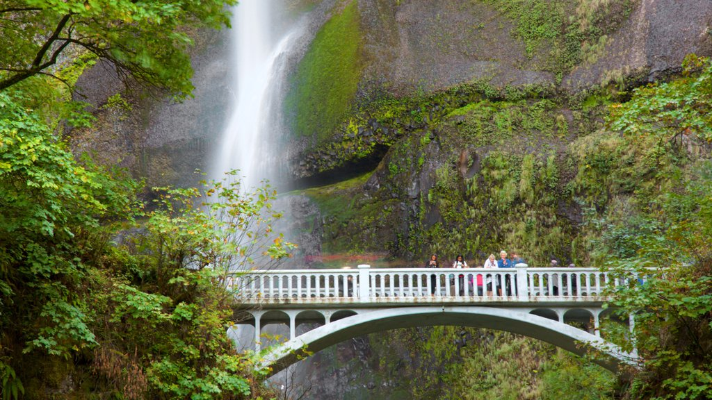 Multnomah Falls showing a cascade, a bridge and rainforest