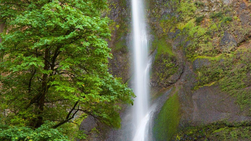 Cascadas de Multnomah ofreciendo una cascada y selva