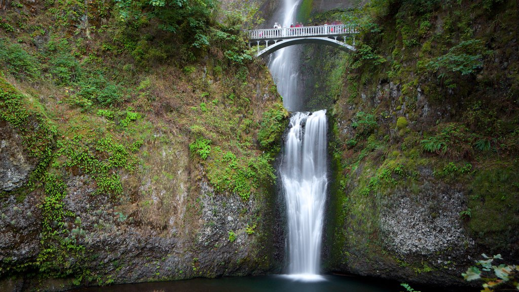 Multnomah Falls which includes a waterfall, rainforest and a bridge