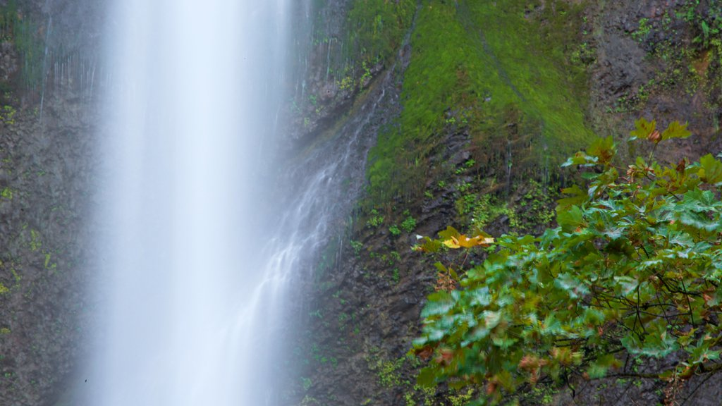 Multnomah Falls which includes tropical scenes and a waterfall