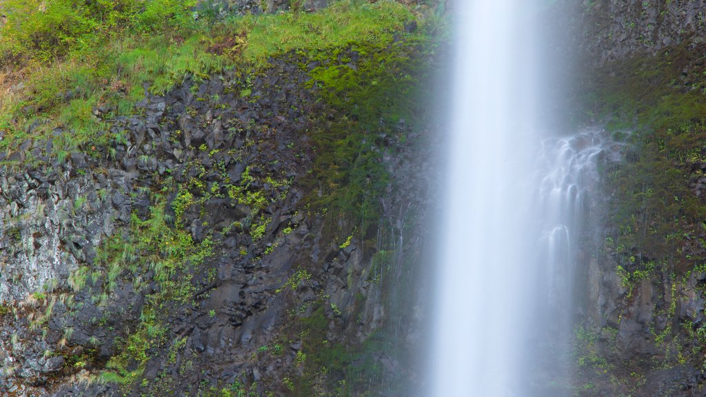 Multnomah Falls which includes a waterfall