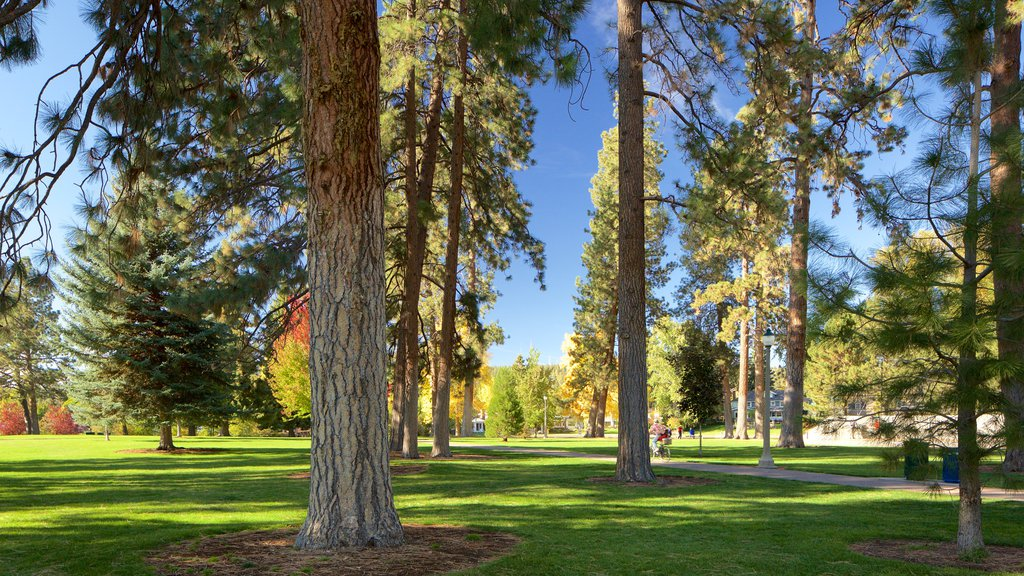 Drake Park mostrando un parque
