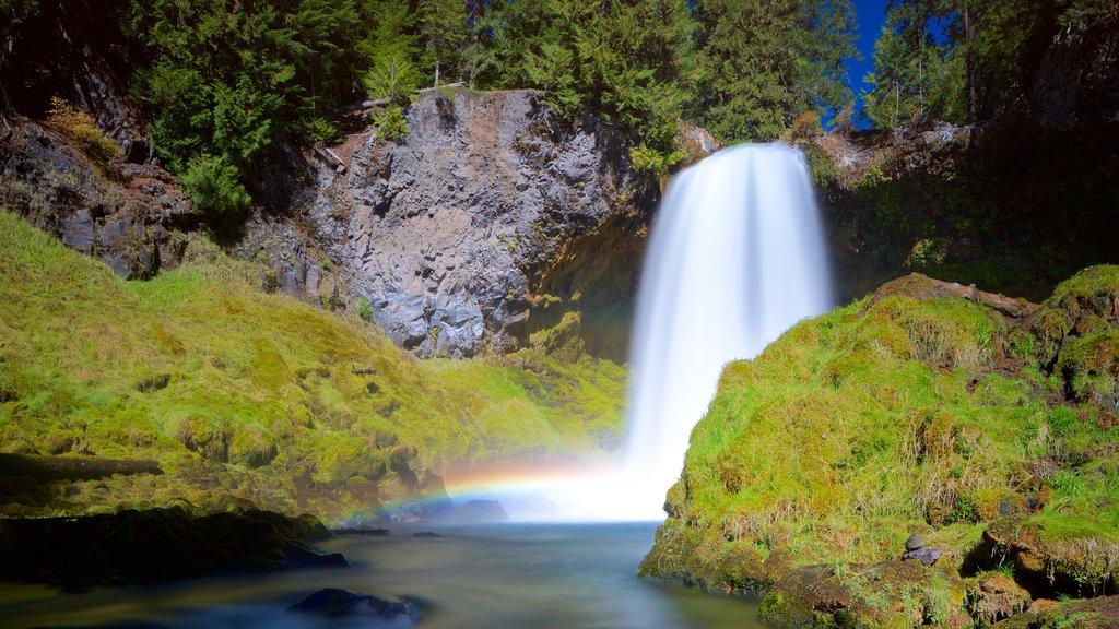 Bosque Nacional Willamette que incluye una catarata