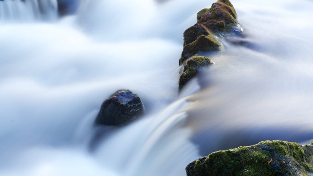 Bosque Nacional Willamette que incluye rápidos