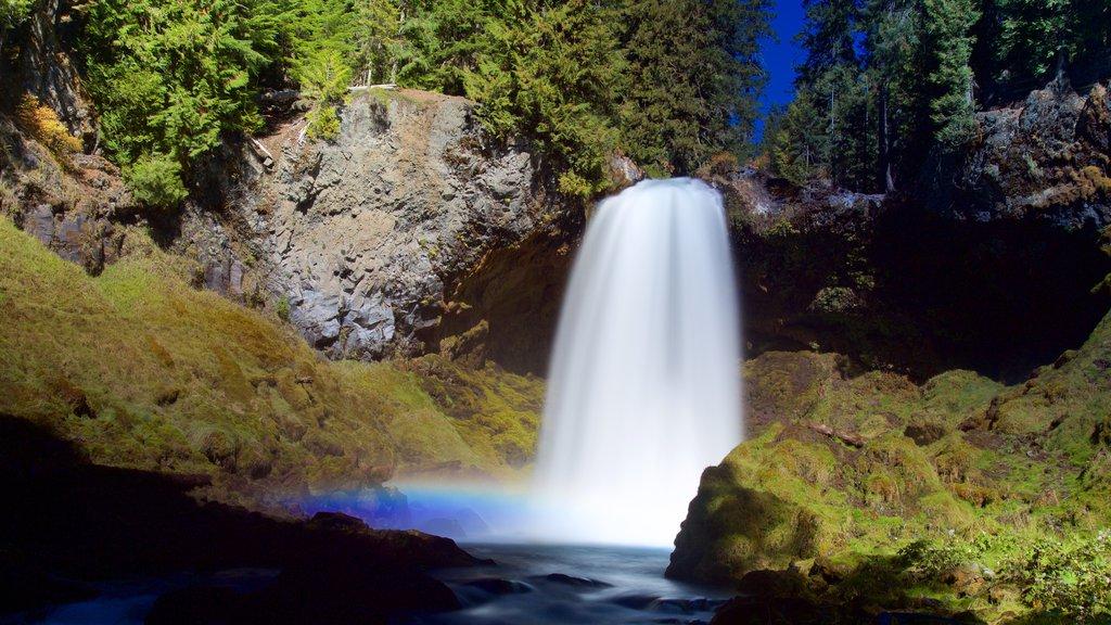 Bosque Nacional Willamette que incluye una cascada y selva