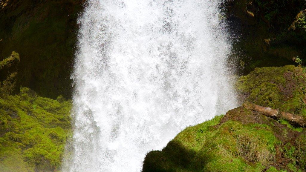 Bosque Nacional Willamette ofreciendo una cascada
