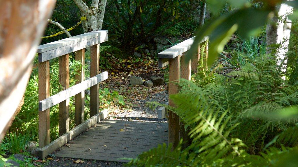 Connie Hansen Garden showing rainforest
