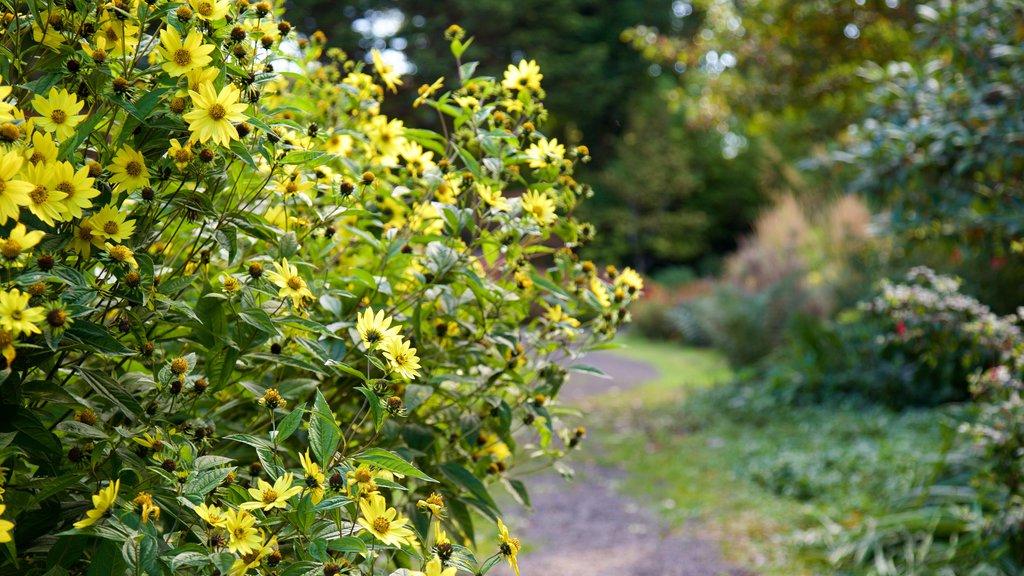Connie Hansen Garden which includes wildflowers