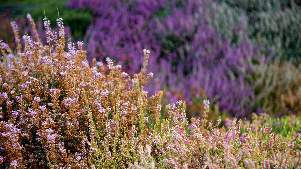 Connie Hansen Garden showing flowers and wildflowers
