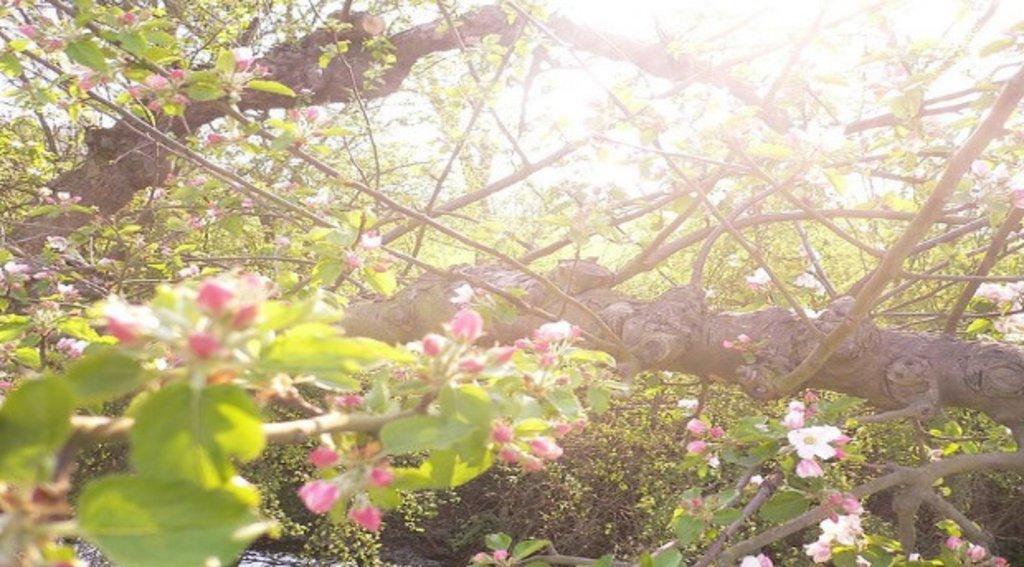 gelderland_lente_fruitbomen.jpg
