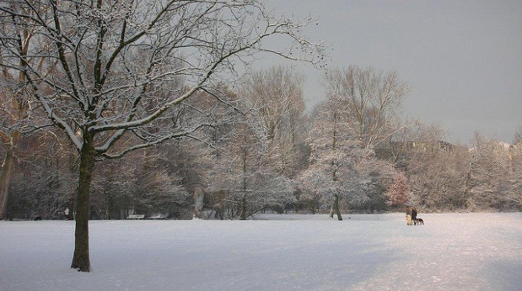 amsterdam_winter_vondelpark.jpg