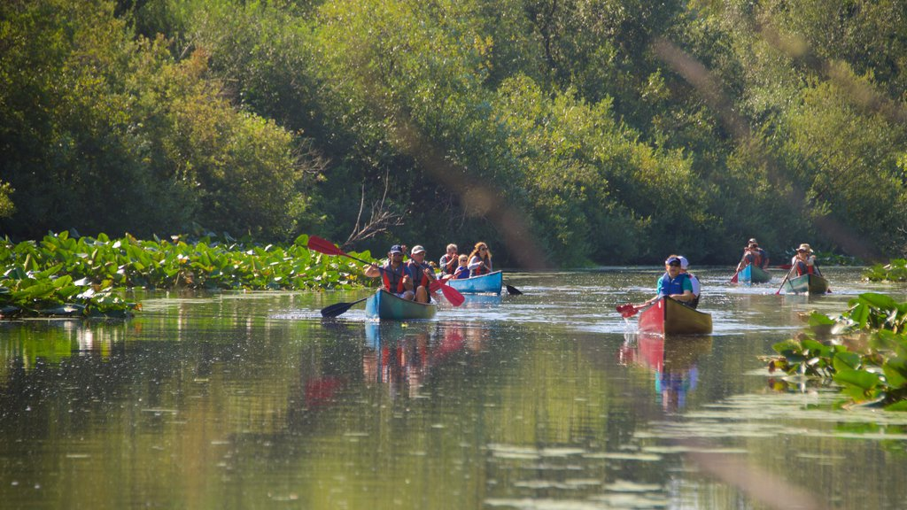 Mercer Slough Nature Park showing kayaking or canoeing and a river or creek as well as a large group of people