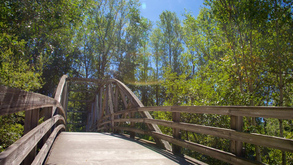 Park at Bothell Landing showing a bridge