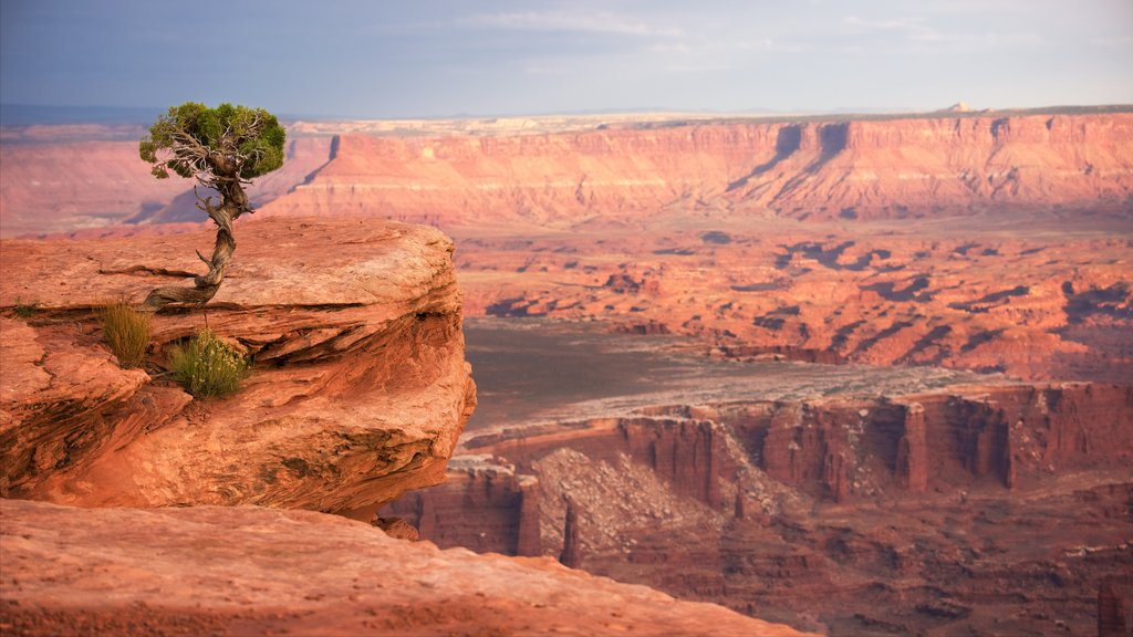 Canyonlands National Park which includes desert views and tranquil scenes