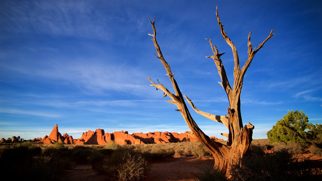 Moab which includes tranquil scenes and desert views