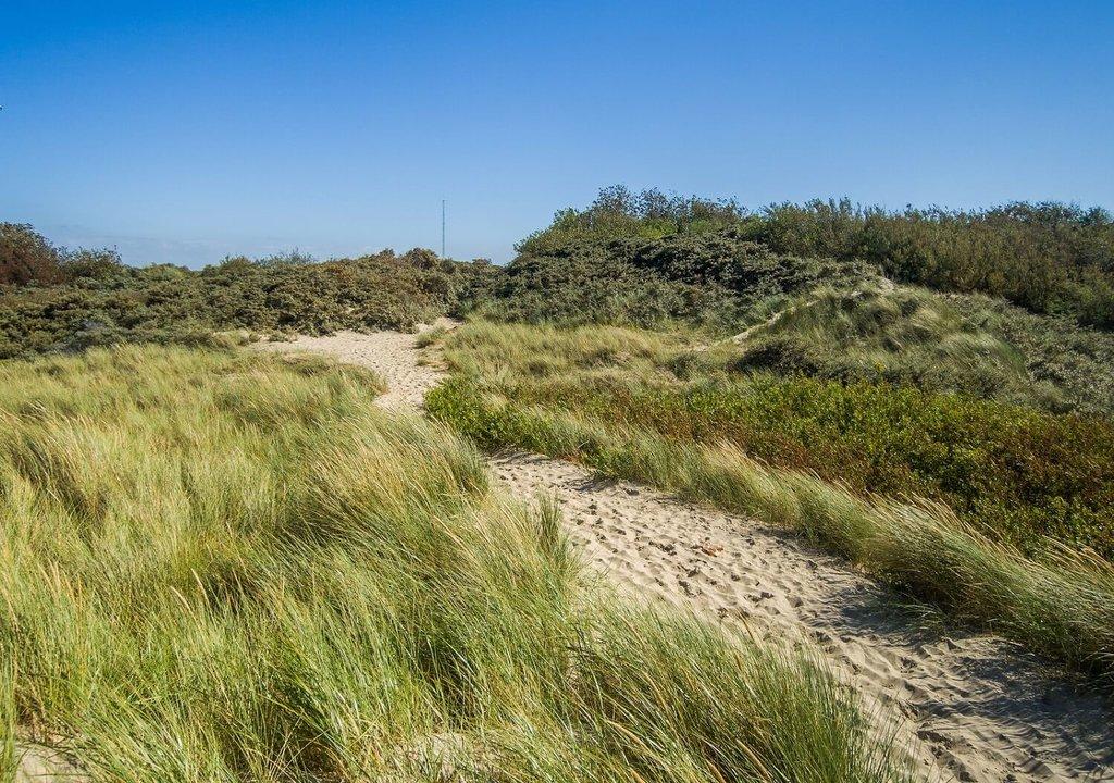 Zeeland-Renesse-dunes_VisualHunt.jpg