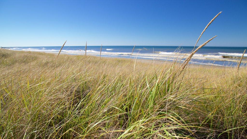 Ocean Shores Beach featuring waves and general coastal views