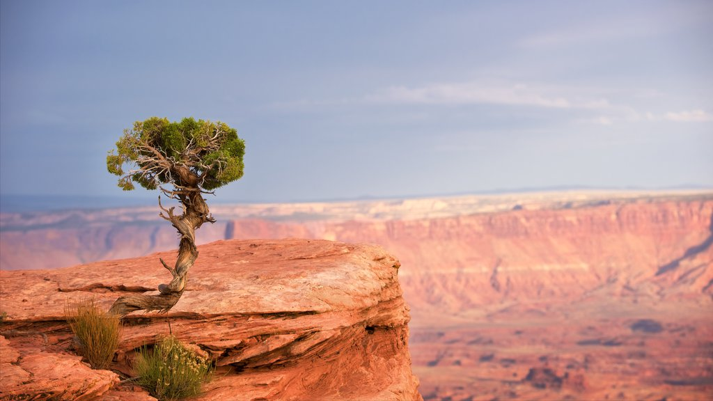 Grand View Point Trailhead showing tranquil scenes, a gorge or canyon and desert views