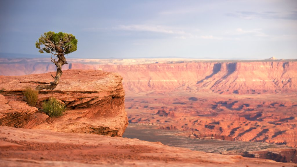 Canyonlands National Park showing a gorge or canyon, desert views and tranquil scenes