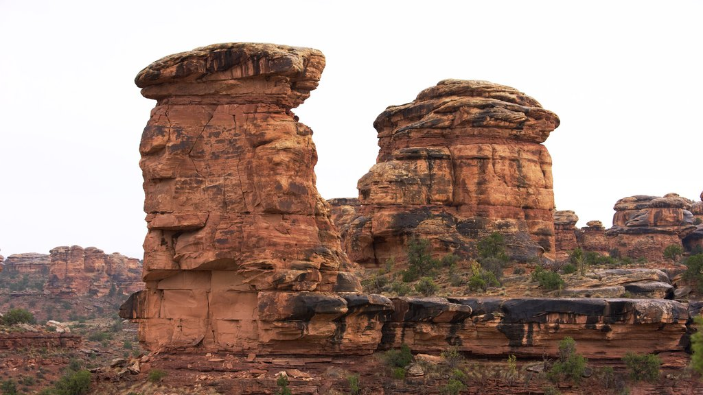 Canyonlands National Park featuring a gorge or canyon, desert views and tranquil scenes