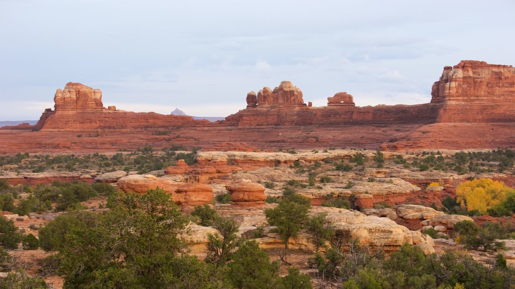 Canyonlands National Park featuring landscape views, desert views and tranquil scenes