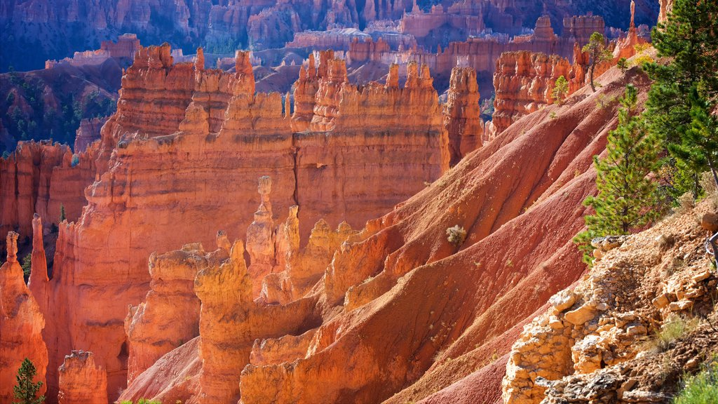 Bryce Canyon National Park showing desert views, tranquil scenes and a gorge or canyon