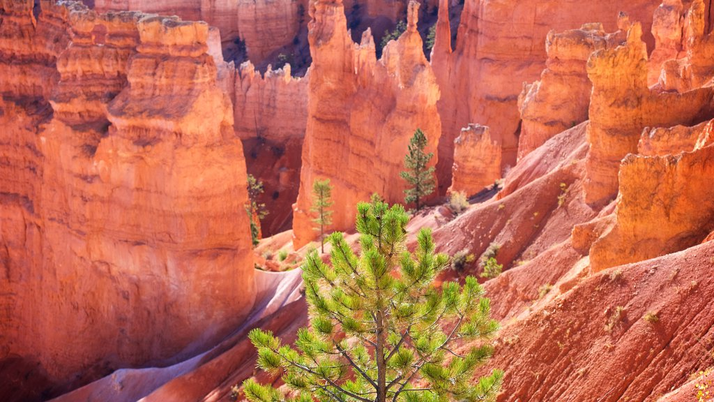Bryce Canyon National Park which includes desert views, a gorge or canyon and tranquil scenes