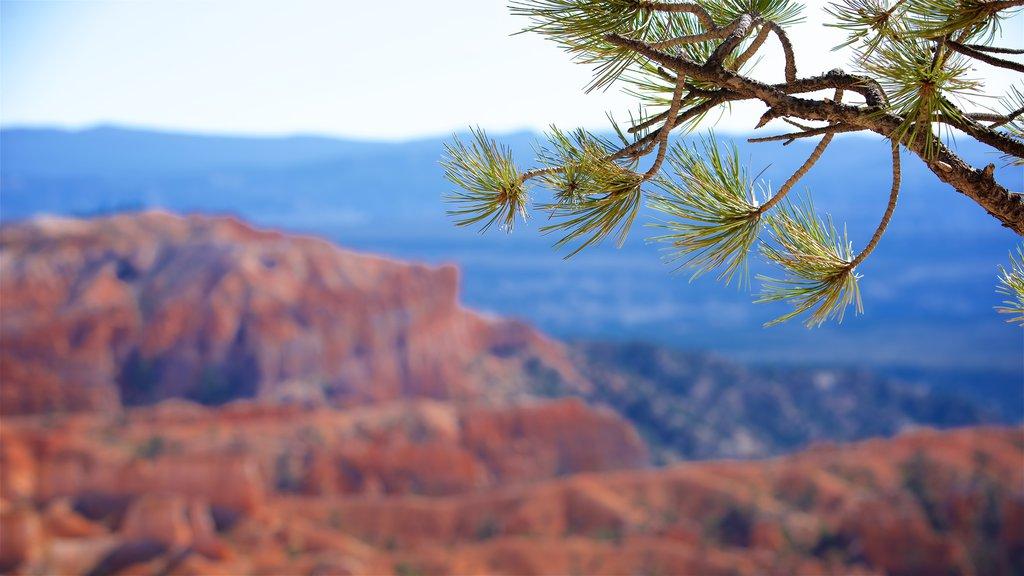 Bryce Canyon National Park mostrando un barranco o cañón, vistas al desierto y escenas tranquilas